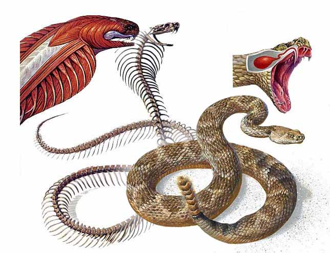 BJ Hoopes Ambler - Natural History, Product Illustration & Other Art ...